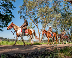 2 Hour Horseback Winery Tour & Lunch at The Epicurean - Mornington Peninsula, Melbourne