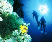 PADI Open Water Course - Great Barrier Reef, Cairns