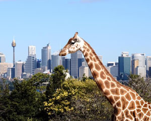 All Day Ferry Pass With Taronga Zoo Entry - Sydney Harbour