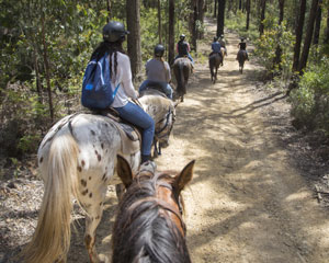 Horse Riding, 2 Hour Yarra Valley State Forest Trail Ride - Chum Creek, Melbourne