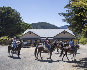 Horse Riding, Yarra Valley Toolangi Pub Ride - Chum Creek, Melbourne