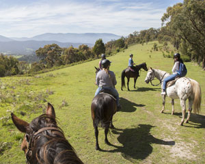Horse Riding, 2 Hour Yarra Valley Winery Ride - Melbourne