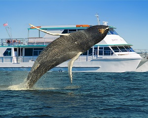 Whale Watching with Breakfast or Lunch - Sydney