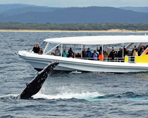 Whale Watching (2 Hour Express) - Mooloolaba Sunshine Coast SCHOOL HOLIDAY SPECIAL