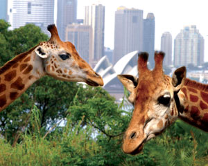 Taronga Zoo Entry and Sydney Harbour Cruise - Family Pass for 2 Adults 2 Children (4-15)