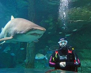 Shark Diving - Sydney Aquarium Darling Harbour DIVING FROM MAY 2018
