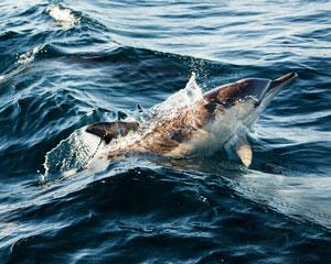 Wild Dolphin Swim - Nelson Bay, Port Stephens
