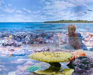 Cairns Aquarium Entry