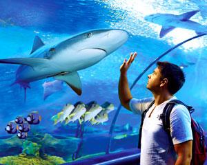 Cairns Aquarium Gold Pass