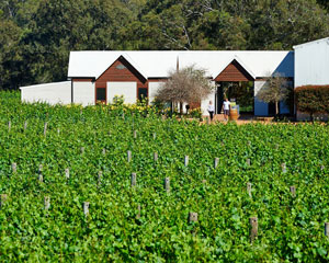 Winery Tours and Tasting with 2-course lunch - Swan Valley