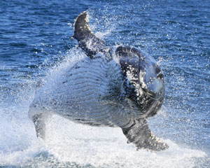 Go Whale Watching - Sydney (Weekday Departure)