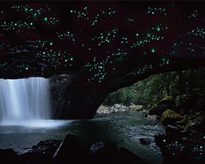Guided Glow Worm and World Heritage Rainforest Tour