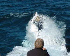 Whale Watching Experience - Coffs Harbour