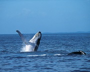 Scenic Whale Watching Cruise - Wilsons Promontory