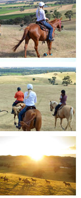 barossa-valley-horse-riding