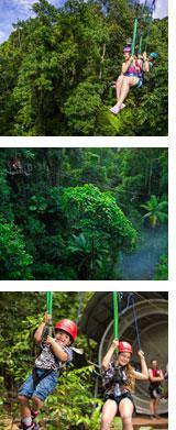 jungle-banner
