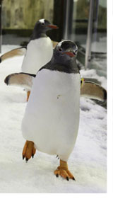 Penguin Passport Sydney