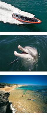 Penguin Cruise Shoalwater