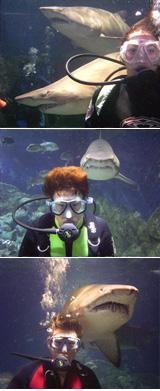 Shark Dive Queensland