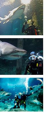 Shark Dive Sydney